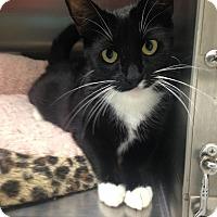 Adopt A Pet :: Sabrina - Newport Beach, CA