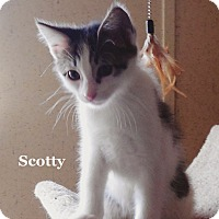 Adopt A Pet :: Scotty - Bentonville, AR