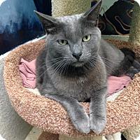 Adopt A Pet :: Blue - Newport Beach, CA