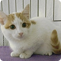 Adopt A Pet :: Patchouli - East Brunswick, NJ