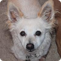 Adopt A Pet :: Radar - Kempner, TX