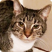 Adopt A Pet :: Zora - Lincolnton, NC