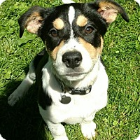Adopt A Pet :: Fq litter - Mertle - Livonia, MI
