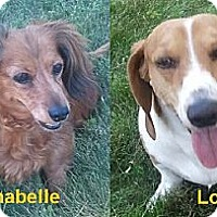 Adopt A Pet :: Annabelle & Louie - Forest Ranch, CA