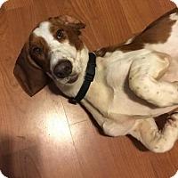 Adopt A Pet :: Gump - Grapevine, TX