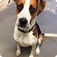 Adopt A Pet :: Leo - Greensburg, PA