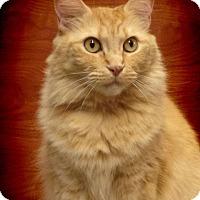 Adopt A Pet :: Katie - Earl, NC