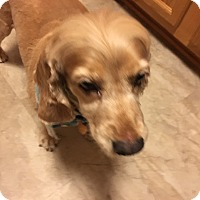 Adopt A Pet :: Lilly 8yr - Mentor, OH