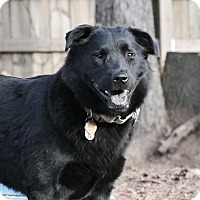 Adopt A Pet :: Piper - McDonough, GA
