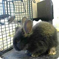 Adopt A Pet :: *HERSHEY - Sacramento, CA