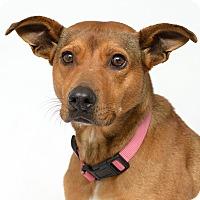 Adopt A Pet :: Sydney - Westfield, NY