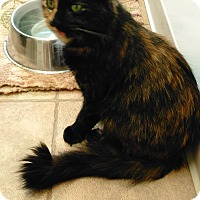 Adopt A Pet :: Eve - Cloquet, MN
