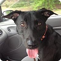 Adopt A Pet :: Princess - Sacramento, CA
