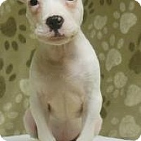 Adopt A Pet :: Rayon - Gary, IN