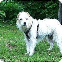 Adopt A Pet :: Lynsie - Thomasville, NC