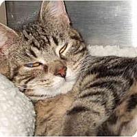 Adopt A Pet :: Peanut - Fort Lauderdale, FL