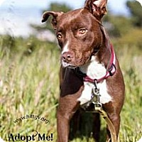Adopt A Pet :: Mabel - San Francisco, CA