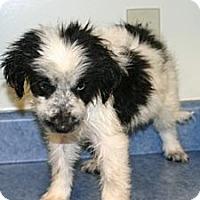Adopt A Pet :: Karen - Jarrettsville, MD