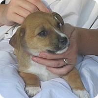 Adopt A Pet :: ALFIE - Glastonbury, CT