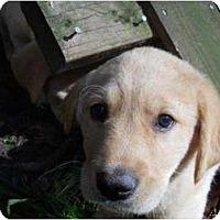 Adopt A Pet :: Finn - Cumming, GA