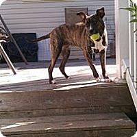 Adopt A Pet :: Reva - Southampton, PA