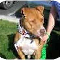 Adopt A Pet :: Rudolph - Scottsdale, AZ