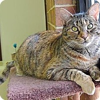 Adopt A Pet :: Strudel - Pineville, NC