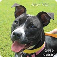 Adopt A Pet :: Suzie Q - Camden, DE
