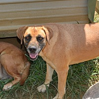 Adopt A Pet :: Allie - Grenada, MS