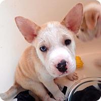 Adopt A Pet :: Heaven in TX - pending - Mira Loma, CA
