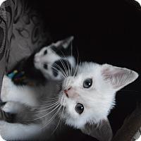 Adopt A Pet :: Elsa & Anna - Brooklyn, NY