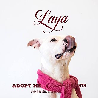 Pit Bull Terrier Mix Dog for adoption in Wichita, Kansas - Laya