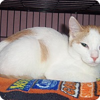 Adopt A Pet :: FRITO - Medford, WI
