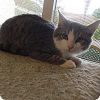 Adopt A Pet :: PRINCE - Rancho Cucamonga, CA