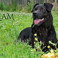 Terrier (Unknown Type, Medium) Mix Dog for adoption in Columbia, Tennessee - Liam
