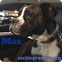 Adopt A Pet :: Max - Jacksonville, AL