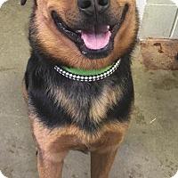 Adopt A Pet :: LEO - Cadiz, OH