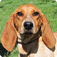 Adopt A Pet :: Bridget - Nashville, IN