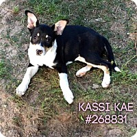 Adopt A Pet :: KASSI MAE - Conroe, TX