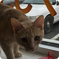 Adopt A Pet :: Aurora - Trevose, PA