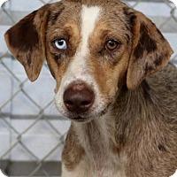Adopt A Pet :: Jessica - Groton, MA