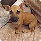 Adopt A Pet :: Triplets Aspen