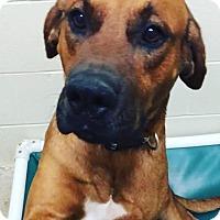 Adopt A Pet :: Jed - Liberty Center, OH