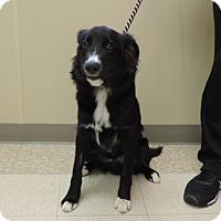 Adopt A Pet :: PATTON - Sioux City, IA