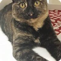 Adopt A Pet :: Manx 110759 - Joplin, MO