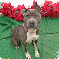Adopt A Pet :: TINSEL - Marietta, GA
