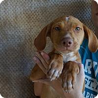 Adopt A Pet :: Jupiter - Oviedo, FL