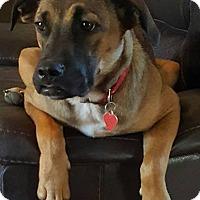 German Shepherd Dog Mix Dog for adoption in Portland, Maine - Gabby