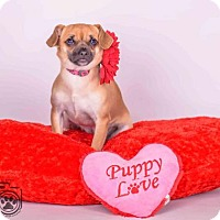 Adopt A Pet :: Abby - Colorado Springs, CO