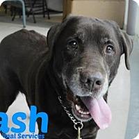 Adopt A Pet :: Cash - Hamilton, ON